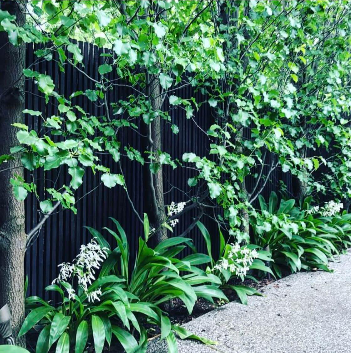Image 19_Nadia Gill Landscape Architect