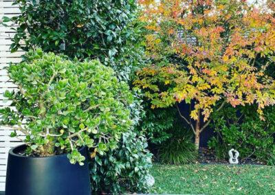 Image 2_ Nadia Gill Landscape Architect